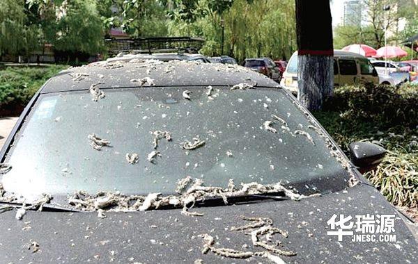 夏季雨水多,车辆保养注意事项